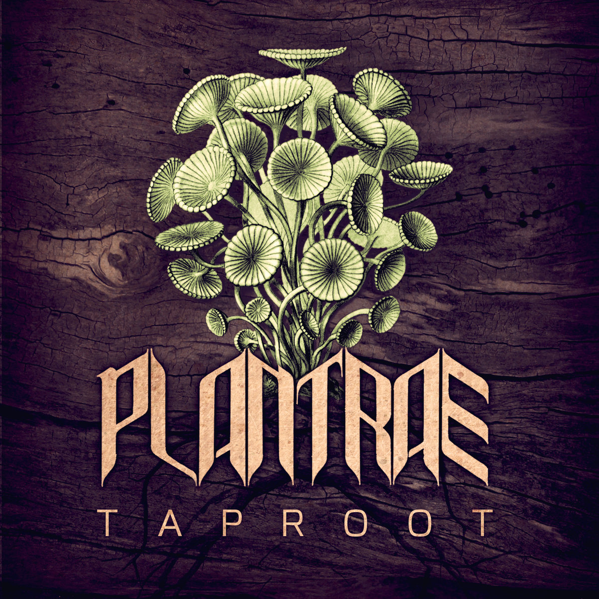 Plantrae - Enter The Seed @ 'Taproot' album (bass, electronic)
